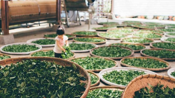 An_Abbreviated_Guide_to_Tea_Culture.jpeg