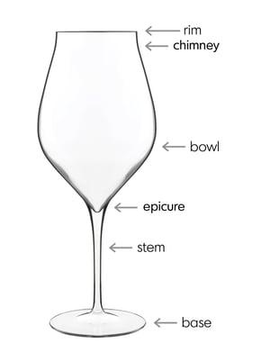 wine anatomy-1